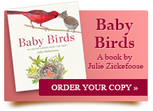 Baby Birds. Click to Order