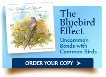 The Bluebird Effect: Click to Order