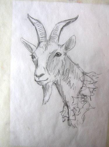 Baby Goat Face Drawing | www.pixshark.com - Images ...