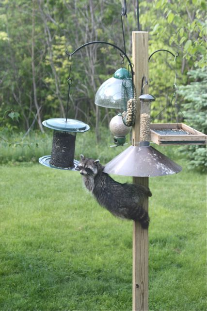 How To Make A Hanging Deer Feeder Home Improvement