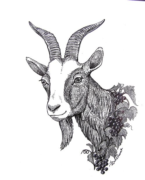 Julie Zickefoose on Blogspot: Zickefoose Wines! Goat Face Side Drawing