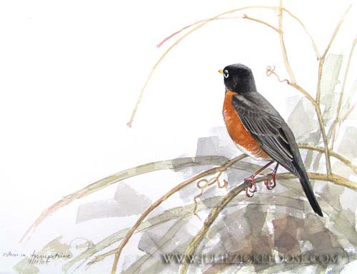 American Robin Drawing American-robin.jpg