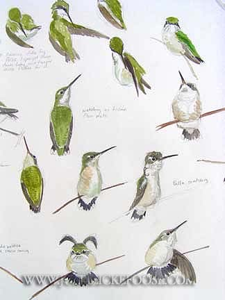 Hummer/Bird Study Group | Our Fine Feathered Friends